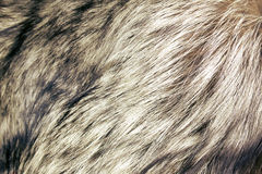Abstract fur background. Close up shot of abstract fur background royalty free stock images