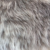 Abstract fur background Stock Image