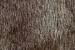 Abstract fur background (texture) Royalty Free Stock Image