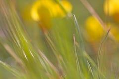 Abstract garden Stock Image