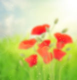 Abstract garden background Stock Image