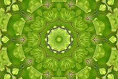 Abstract Garden Fern. Abstract organic kaleidoscope pattern of a garden fern Stock Photo