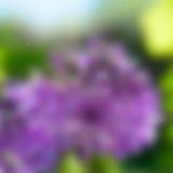 Abstract Garden Grunge Stock Photography