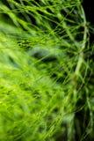 Abstract gebladerte op groene achtergrond Stock Afbeelding
