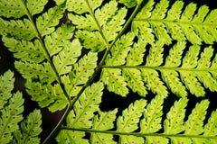 Abstract gebladerte op groene achtergrond Stock Fotografie