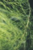 abstract gebladerte op groene achtergrond - de uitstekende film ziet eruit Royalty-vrije Stock Afbeelding