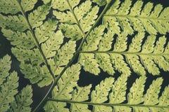 abstract gebladerte op groene achtergrond - de uitstekende film ziet eruit Royalty-vrije Stock Afbeeldingen