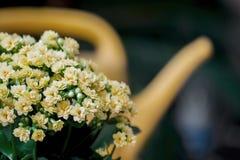 Abstract geel bloemenboeket, gieter, selectieve nadruk Mooie natuurlijke bloemenachtergrond Seizoenen, het tuinieren Royalty-vrije Stock Afbeelding