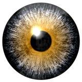 Abstract geel oog dat op wit wordt geïsoleerd Royalty-vrije Stock Afbeeldingen