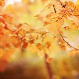 Abstract Geel Vaag Autumn Bokeh Background Stock Afbeeldingen