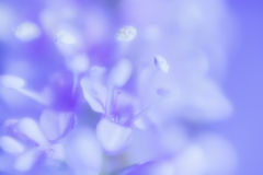 Abstract Gentle Lilac Floral Background Stock Images