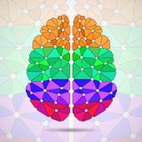 Abstract geometric human brain from. Colorful triangles vector illustration