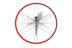 Abstract geometric made from dragonfly proportion Royalty Free Stock Image