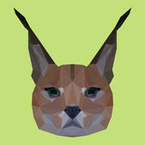 Abstract geometric polygonal lynx Stock Photography