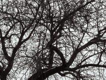Abstract geometrisch natuurlijk patroon van boomkroon op een witte hemelachtergrond Zwarte die lijnen van takken willekeurig op e stock foto