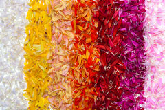 Abstract gerbera petal rainbow background Royalty Free Stock Photo