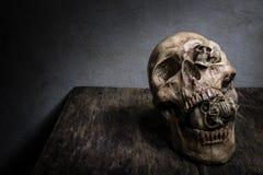 Abstract gezicht van schedel Stock Foto's