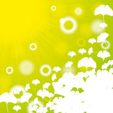 Abstract ginkgo biloba background. Abstract green ginkgo biloba background bokeh Royalty Free Stock Photos