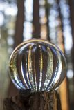 Abstract Glass Ball Reflection of Giant Sequoia Redwood Trees in. Towering Giant Sequoia Redwood Trees captured in glass ball held in hand with lines of trunks royalty free stock image