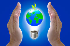 Abstract globe in the light bulb. With plant growing up, protect our world, save the earth Stock Photos