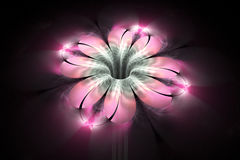 Abstract glowing colorful flower on black background. Stock Photography