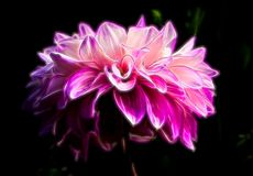 Abstract Glowing Magenta Shape Suggesting of a Dahlia stock photo