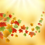 Abstract gold autumn background Stock Photos