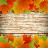 Abstract golden autumn frame. From maple leaves on wood background. Vector eps10 illustration Stock Images
