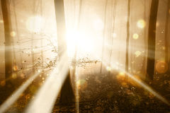 Abstract golden light in the forest Royalty Free Stock Photography