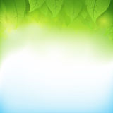 Abstract gradient green background with transparency leaf. For ecology concepts, wiht copy space Stock Photography