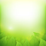 Abstract gradient green background with transparency leaf. For ecology concepts, wiht copy space Royalty Free Stock Photography