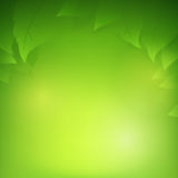 Abstract gradient green background with transparency leaf. For ecology concepts, wiht copy space Stock Photo