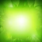 Abstract gradient green background with transparency leaf  Stock Photography