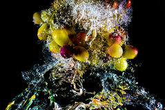 Abstract grapes in water Royalty Free Stock Image