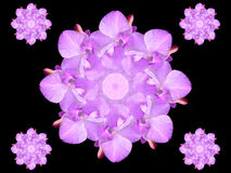 Abstract Graphic Design Orchid Flower. The Graphic Design Abstract Orchid Flower Background Wallpaper Stock Photo