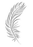 Abstract graphic feather vector illustration. Styled natural feather vector illustration