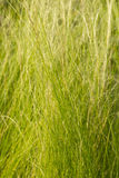 Abstract gras Stock Foto