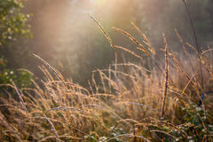 Abstract gras in zonlicht Stock Fotografie