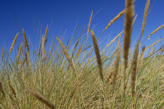 Abstract grass. Abstract of sea grass against blue sky Royalty Free Stock Photos
