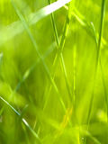 Abstract grass 2 Stock Photos