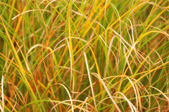 Abstract of grass Royalty Free Stock Photography