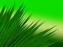 Abstract grass. Abstract 3d illustration of green background with grass Stock Photography