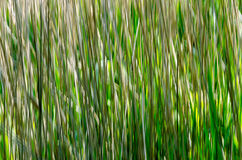 Abstract grass Royalty Free Stock Photos