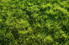 Abstract grass background Stock Photos