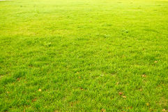Abstract grass background Stock Photography