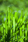 Abstract Grass blades Royalty Free Stock Images