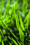 Abstract Grass blades Royalty Free Stock Photo