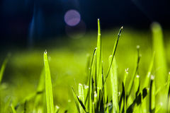 Abstract Grass blades Royalty Free Stock Photography