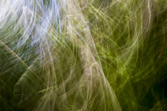 Abstract grass blur. Royalty Free Stock Images