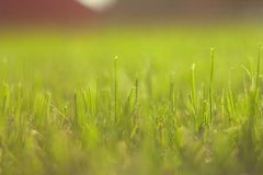 Abstract grass Stock Photo